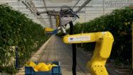 ربات میوه چین
